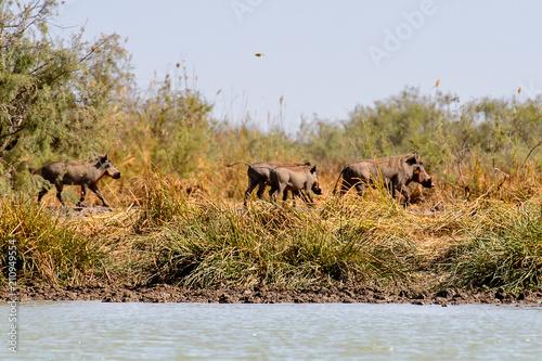 Photo  Djoudj National Bird Sanctuary, Senegal. UNESCO World Heritage