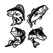 Set Of Big Bass Fish Illustrat...