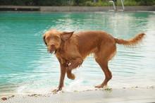 Hund In Einem Schwimmbad Im Hochsommer