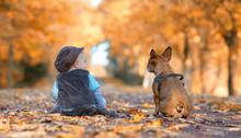 Im Herbst In Der Allee