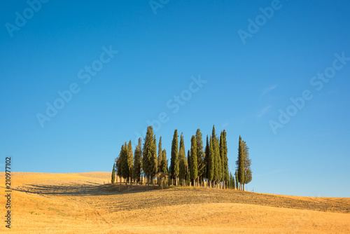 Deurstickers Toscane Beautiful typical tuscan landscape with cypress trees in a field in summer, Val d'Orcia, Tuscany, Italy