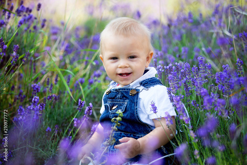 Sweet toddler child in casual cloths, sitting in lavender field, smiling