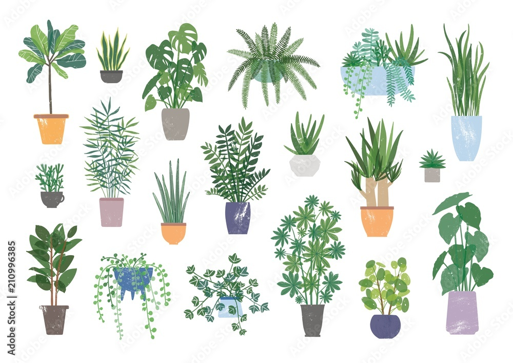 Fototapety, obrazy: Collection of decorative houseplants isolated on white background. Bundle of trendy plants growing in pots or planters. Set of beautiful natural home decorations. Flat colorful vector illustration.