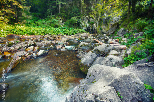 River in the forest. Beautiful natural landscape in the summer time