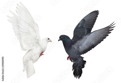 dark and light pigeons flying on white