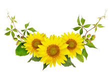 Sunflowers, Green Berries And ...
