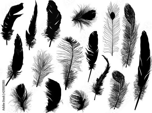 kolekcja szesnastu czarnych piór na białym tle