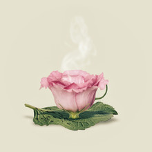 Flower Cup, Pink On Plain Background
