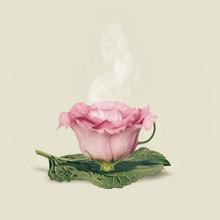 Flower Cup, Pink On Plain Back...