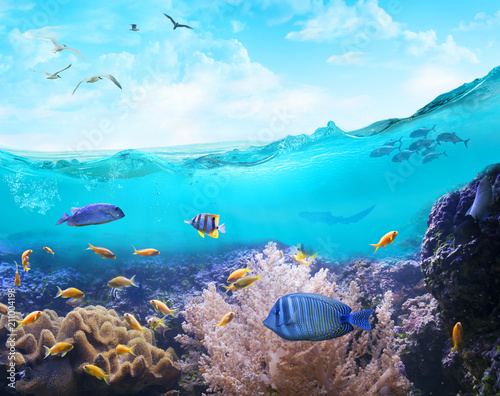 plakat Marine life in tropical waters.