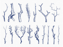 Hand Drawn Wood Branches Colle...