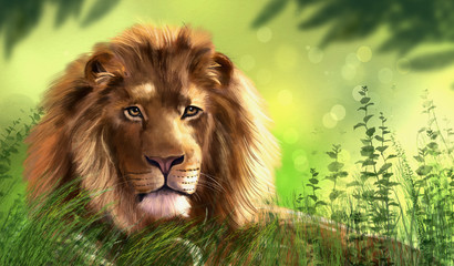 FototapetaIllustration of lion. Digital painting.