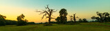 Fototapeta Sawanna - beautiful rogalin oak in the summer sunset