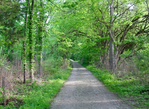 The long gravel path in the green spring forest.