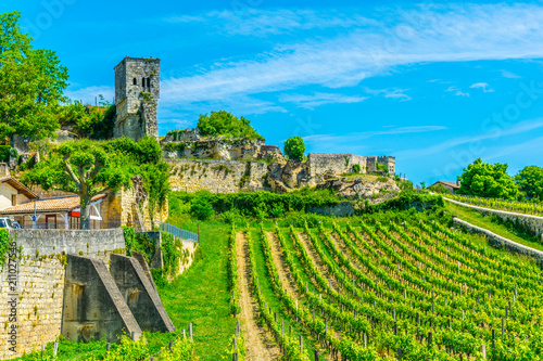 Canvas Print Vineyards at Saint Emilion, France