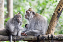 Family Of Monkeys With A Littl...