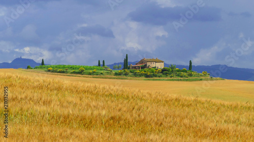Deurstickers Toscane Tuscany landscape - fields, vineyard, meadow and forest, Val d'Orcia, Italy