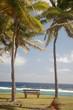 Bench overlooking the Pacific Ocean