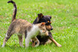 canvas print picture - cat and dog are touching their heads. Beautiful animal friendship. Cat and dog love