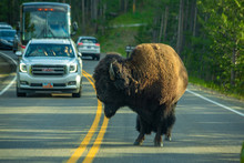 Bison Jam, Hayden Valley, Yellowstone National Park