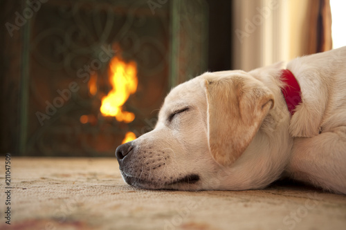 Fotografie, Obraz  Puppy sleeping in front of a fireplace