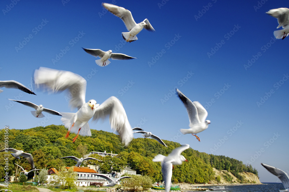The seagulls fly over pier in Gdynia Orlowo, Poland