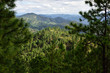 mountain ridges with pine forest
