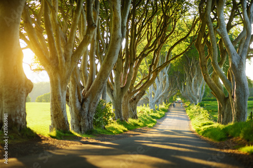 Wall Murals Northern Europe The Dark Hedges, an avenue of beech trees along Bregagh Road in County Antrim, Nothern Ireland