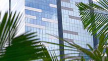 CLOSE UP: Rustling Palm Tree Leaves Obstruct View Of High Rising Office Building