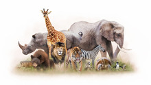 Group Of Zoo Animals Together ...