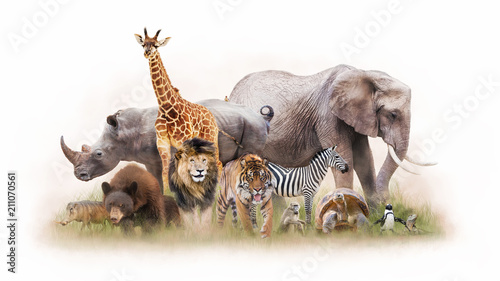 Fényképezés Group of Zoo Animals Together Isolated