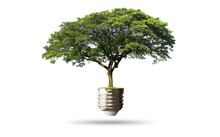 Green Tree Growing Out Of Electric Light Bulb ,- Eco Concept  ,isolated On White Background With Clipping Path .
