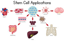 Stem Cell Applications Diagram