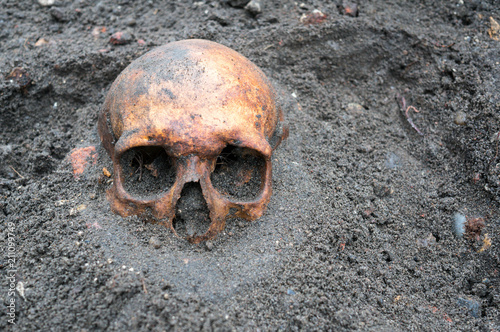 Archaeological excavation with skull still half buried in the ground Canvas Print