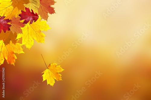 Beautiful sunny colorful fall season leaves on blurry bokeh copy space background Canvas Print
