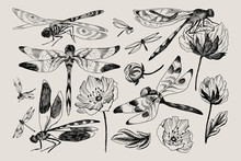 Big Set Of Vector Floral Elements With Black And White Hand Drawn Herbs, Wildflowers And Dragonfly In Sketch Style.
