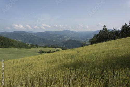 Fotografie, Obraz  Panorama con grano