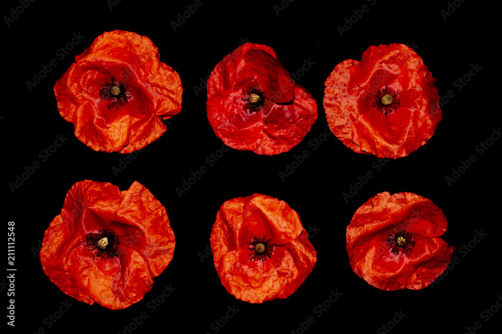 Red Poppies on A Black Background