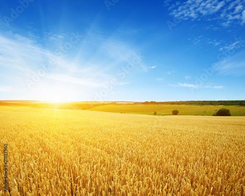 Montage in der Fensternische Wiesen / Sumpfe Wheat field and sun