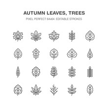 Autumn Leaves Flat Line Icons. Leaf Types, Rowan, Birch Tree, Maple, Chestnut, Oak, Cedar Pine, Linden,guelder Rose. Thin Signs Of Nature Plants Pixel Perfect 64x64. Editable Strokes