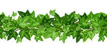 Vector Horizontal Seamless Garland With Green Ivy Leaves On A White Background.