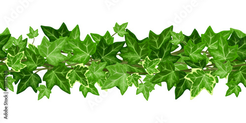 Valokuvatapetti Vector horizontal seamless garland with green ivy leaves on a white background