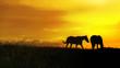 pferde bei sonnenuntergang auf der weide.