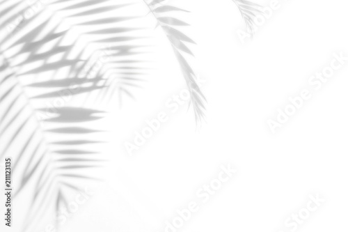 Shadows from palm trees on a white wall Canvas Print