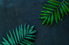 Variations Of Tropical Palm Leaves On The Texture Of Concrete. Creative Tropical Leaves On Dark Background, Copy Space, Closeup. Banner