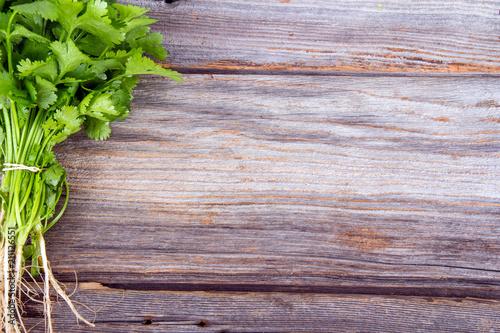 fresh coriander or cilantro bouquet