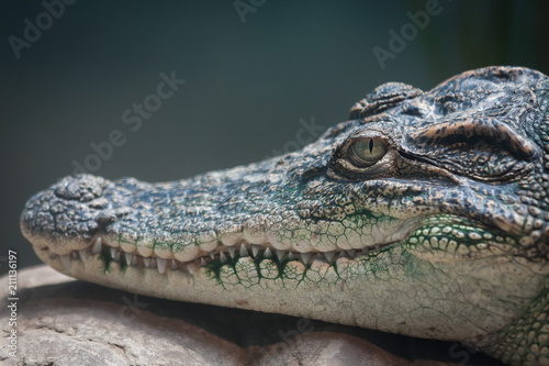 Foto op Canvas Krokodil crocodile head closeup