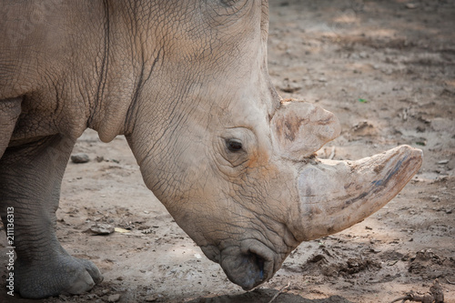 Foto op Aluminium Neushoorn Rhino head close-up