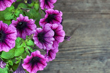 Petunia Flowers On The Wooden Background