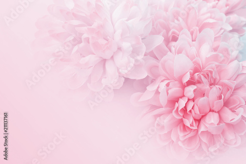 Canvas Prints Floral Chrysanthemum flowers in soft pastel color and blur style for background